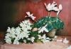 76-alpenveilchen-und-rhododendron-2007