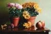 103 Stillleben-mit-Chrysanthemen-und-Aepfeln