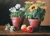 geranien-und-sonnenblumen-2018-2